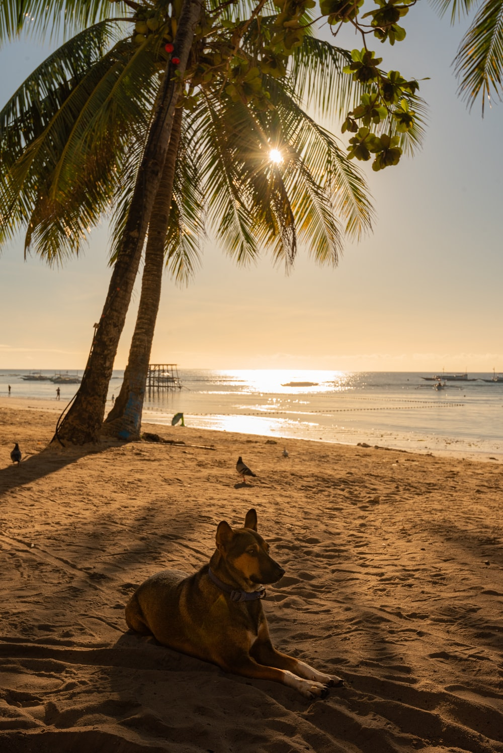 brown and black german shepherd lying on beach sand during sunset