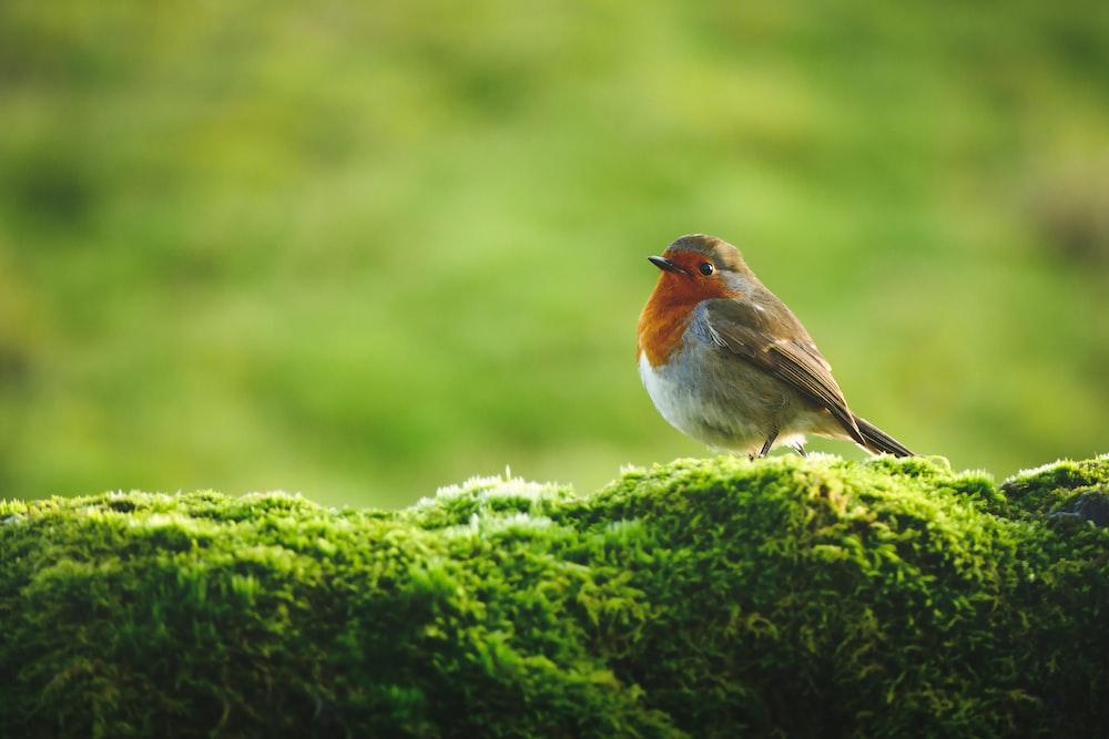 orange and white bird on green moss