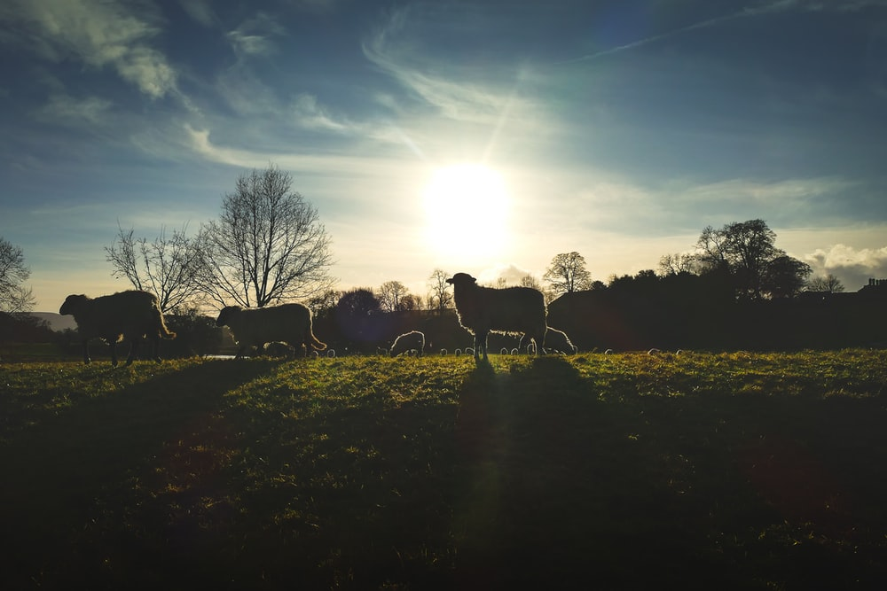 silhouette of horses on green grass field during daytime