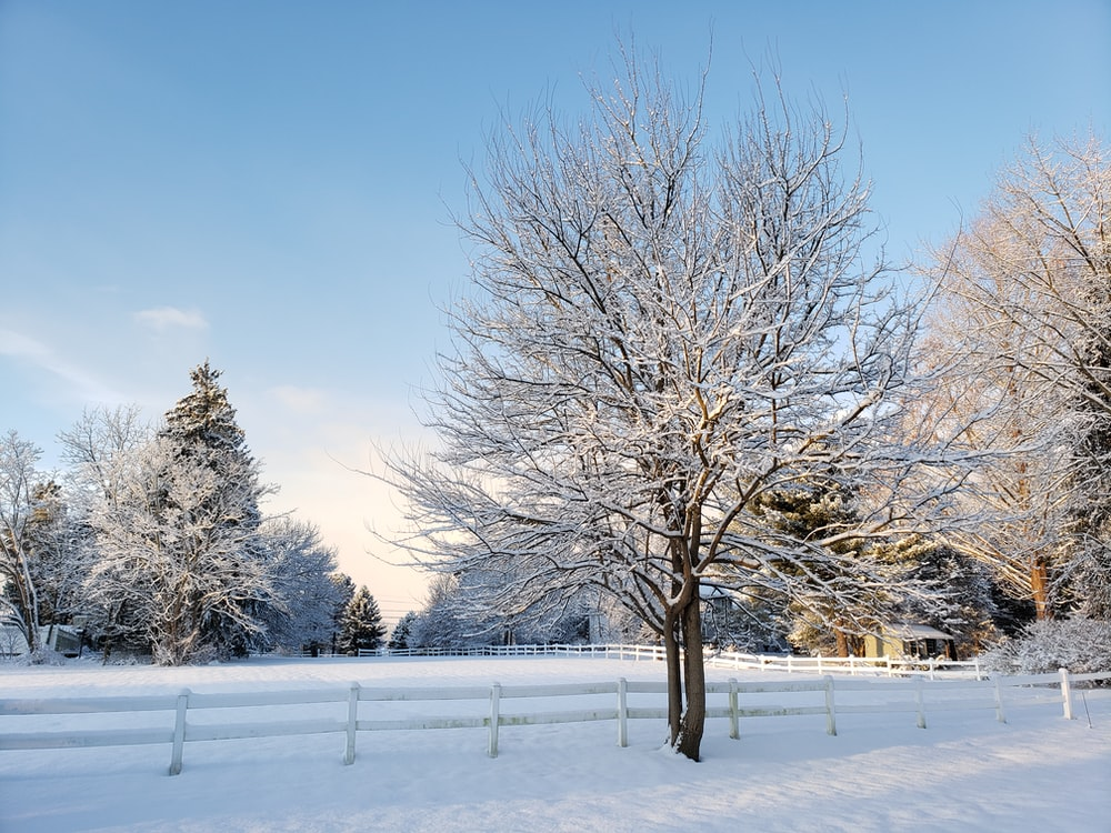 bare trees on snow covered ground under blue sky during daytime