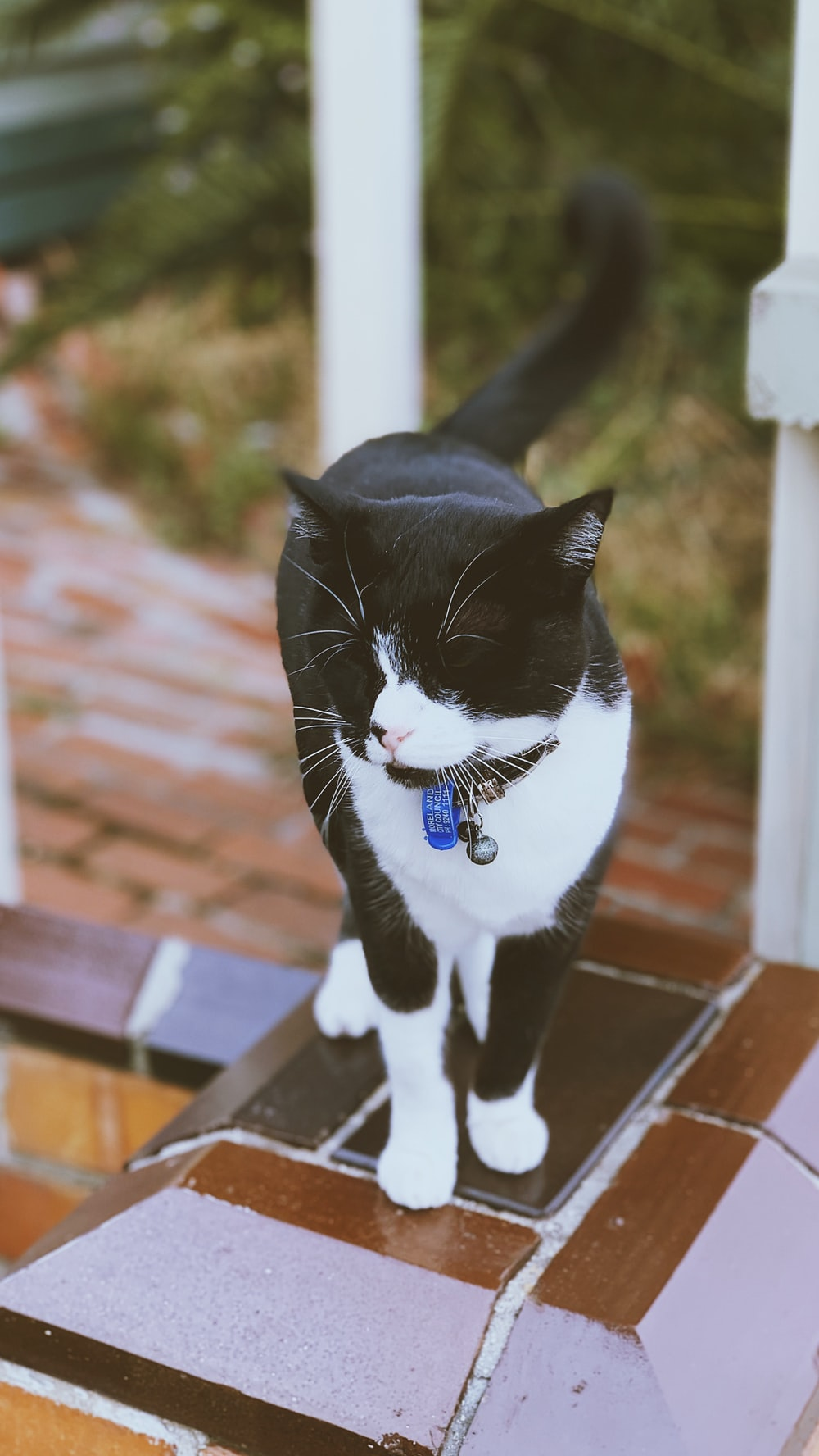tuxedo cat on brown wooden fence during daytime