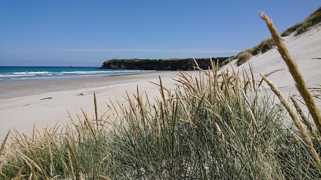 Wild southern New Zealand beach through grass