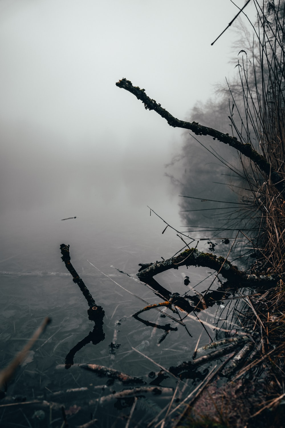 brown leafless tree on foggy weather