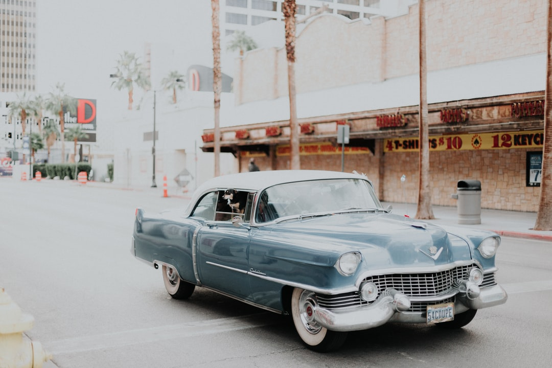 Vintage Vegas Vibes (and A Little Dog, Too) - unsplash