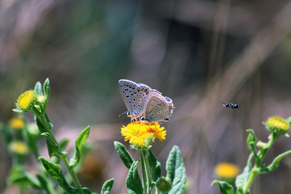 brown and white butterfly perched on yellow flower in close up photography during daytime