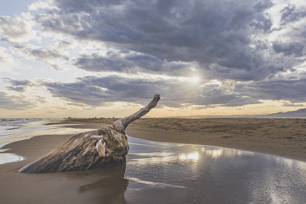 brown tree trunk on brown sand near body of water during daytime