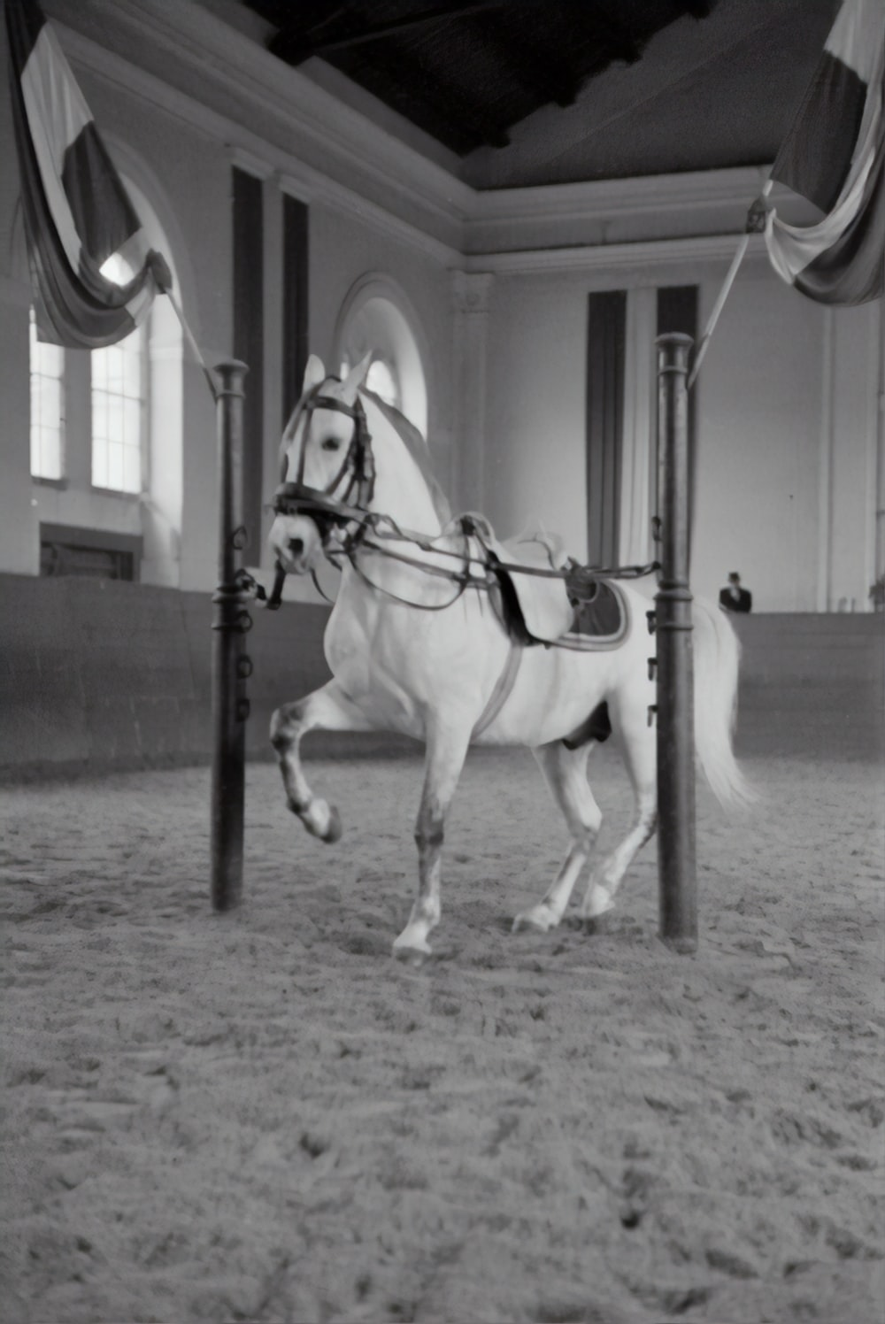 grayscale photo of horse in a building