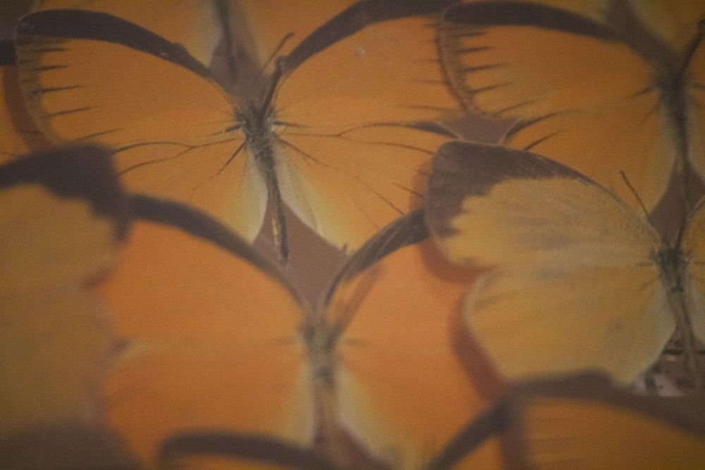 yellow leaves in close up photography