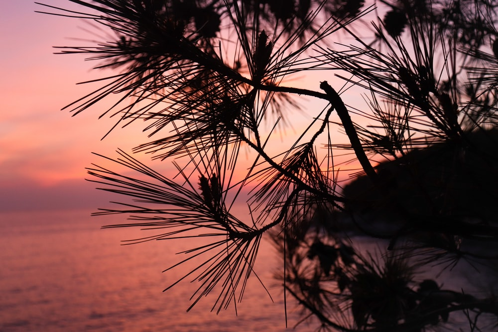 silhouette of plant during sunset