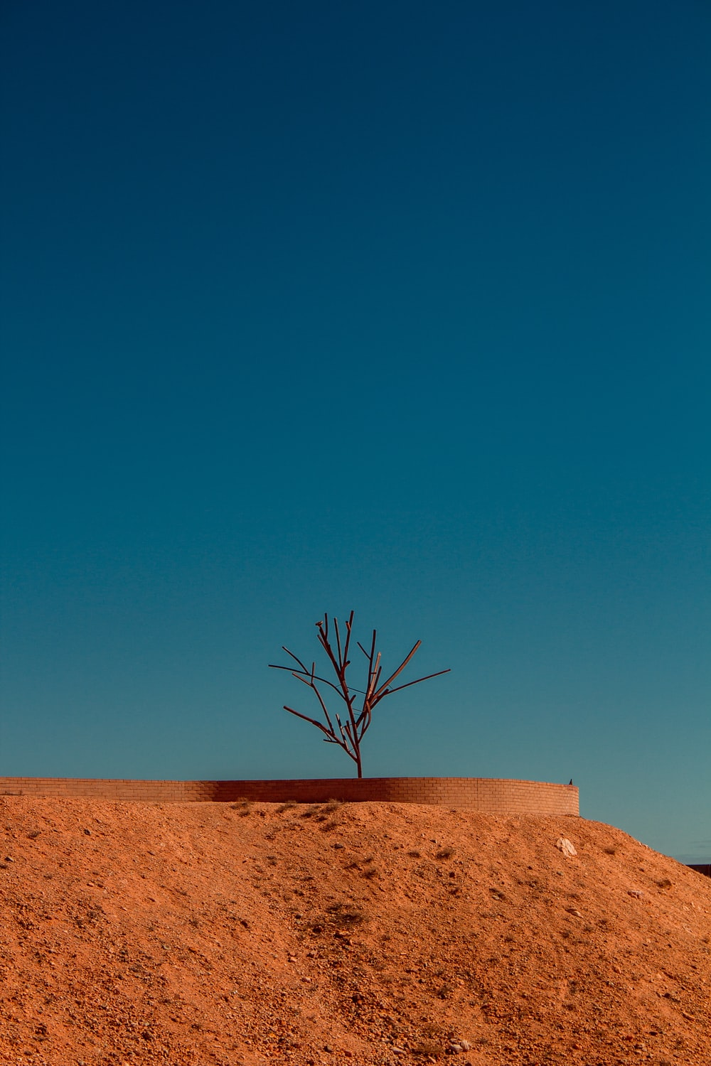 bare tree on brown sand under blue sky during daytime