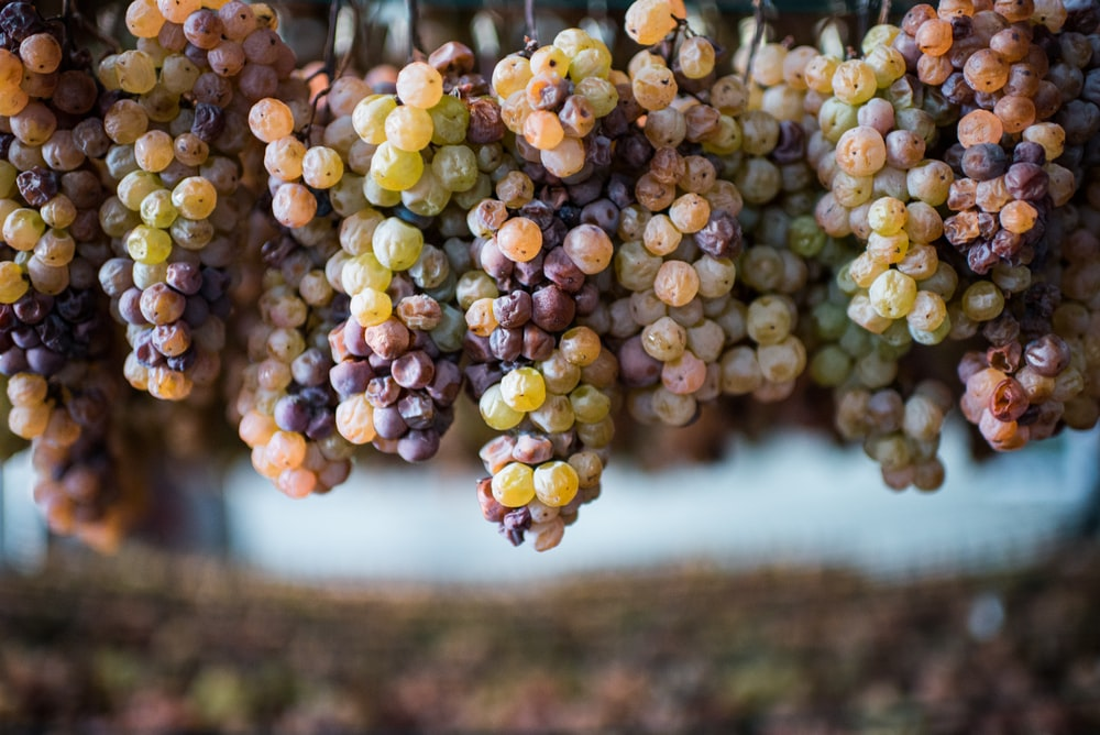 green and yellow grapes during daytime