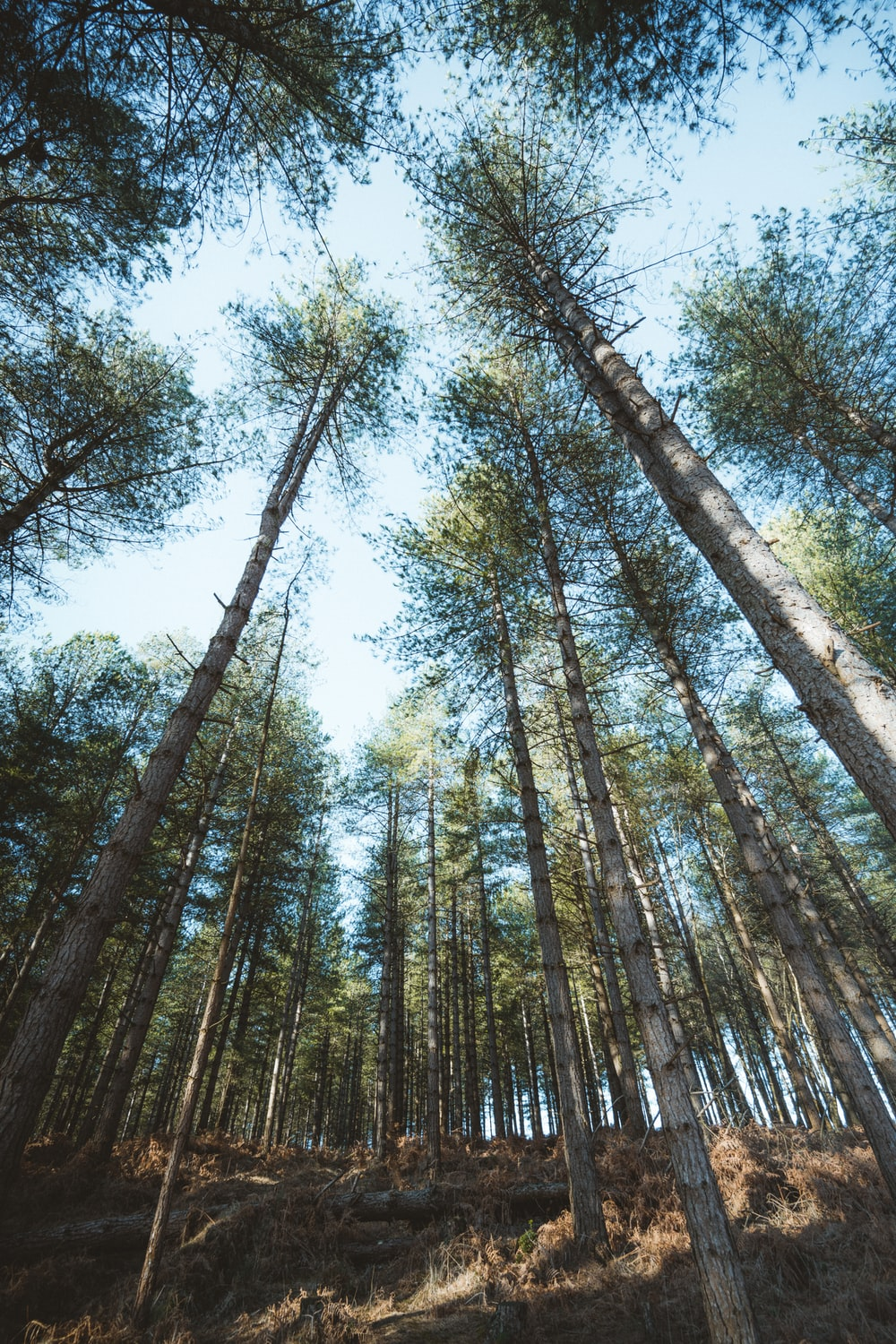 low angle photography of green trees during daytime