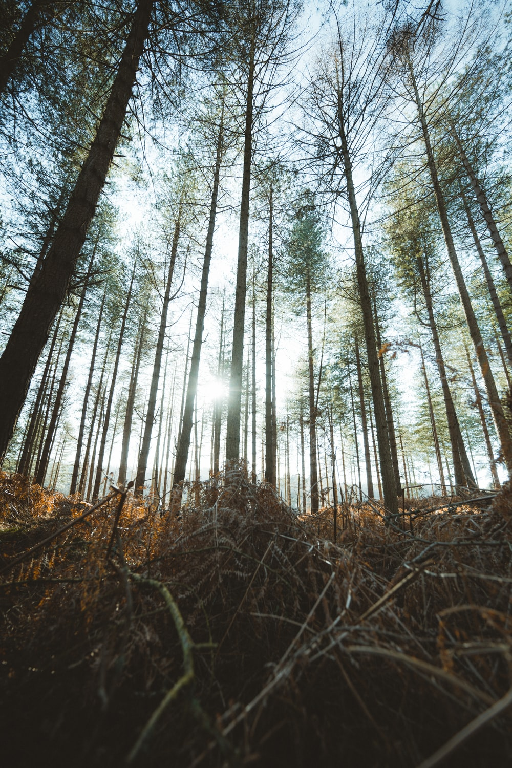 brown trees in forest during daytime