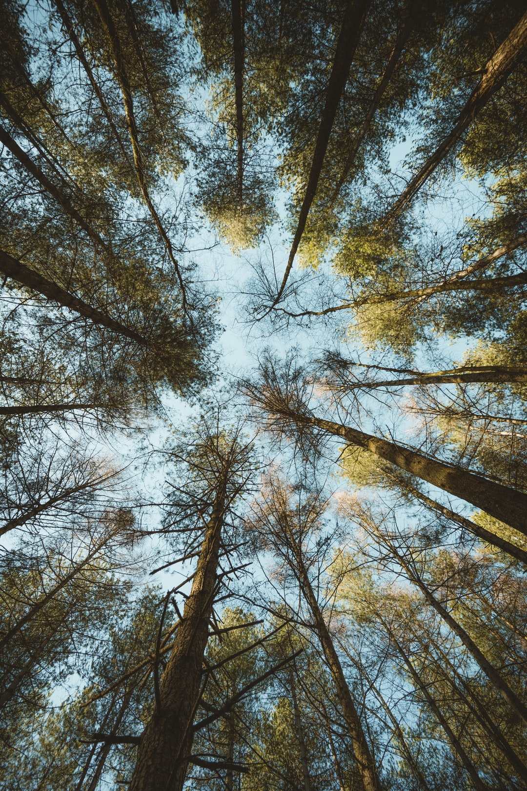 Wide angle view of tree canopy