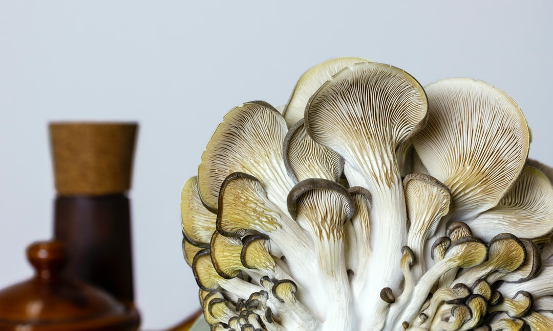 Mushrooms close up - organic oyster mushrooms in kitchen