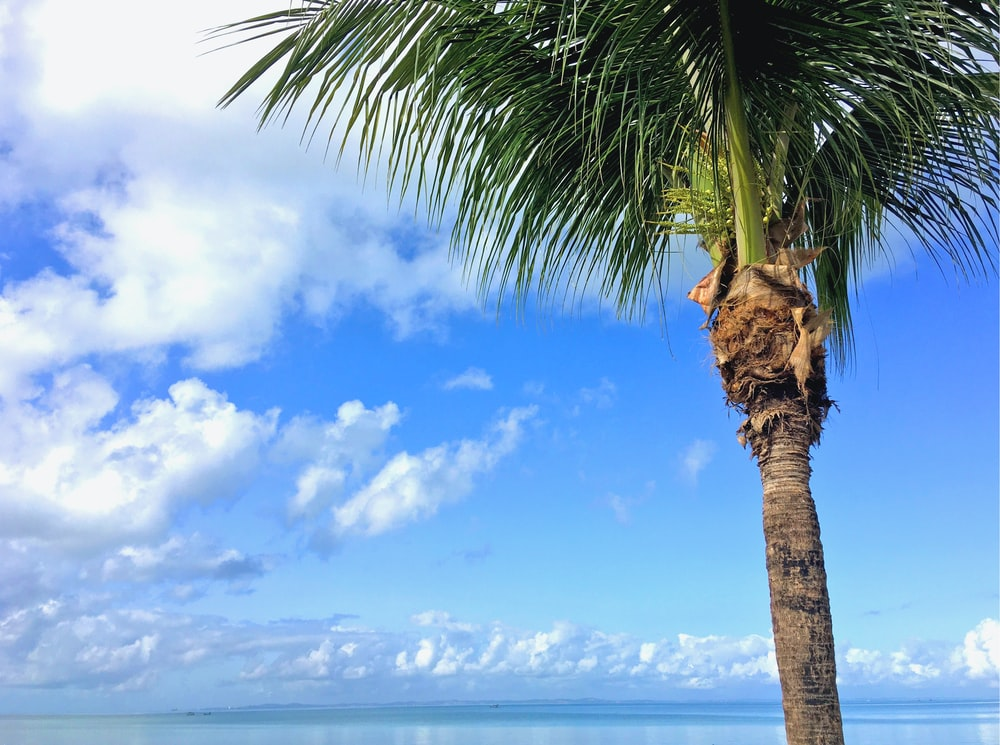 coconut tree near sea under blue sky during daytime