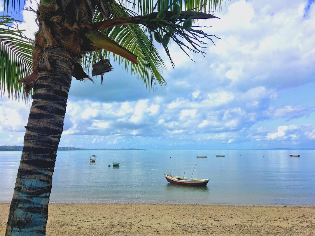 Coqueiro na Praia de Tubarão.