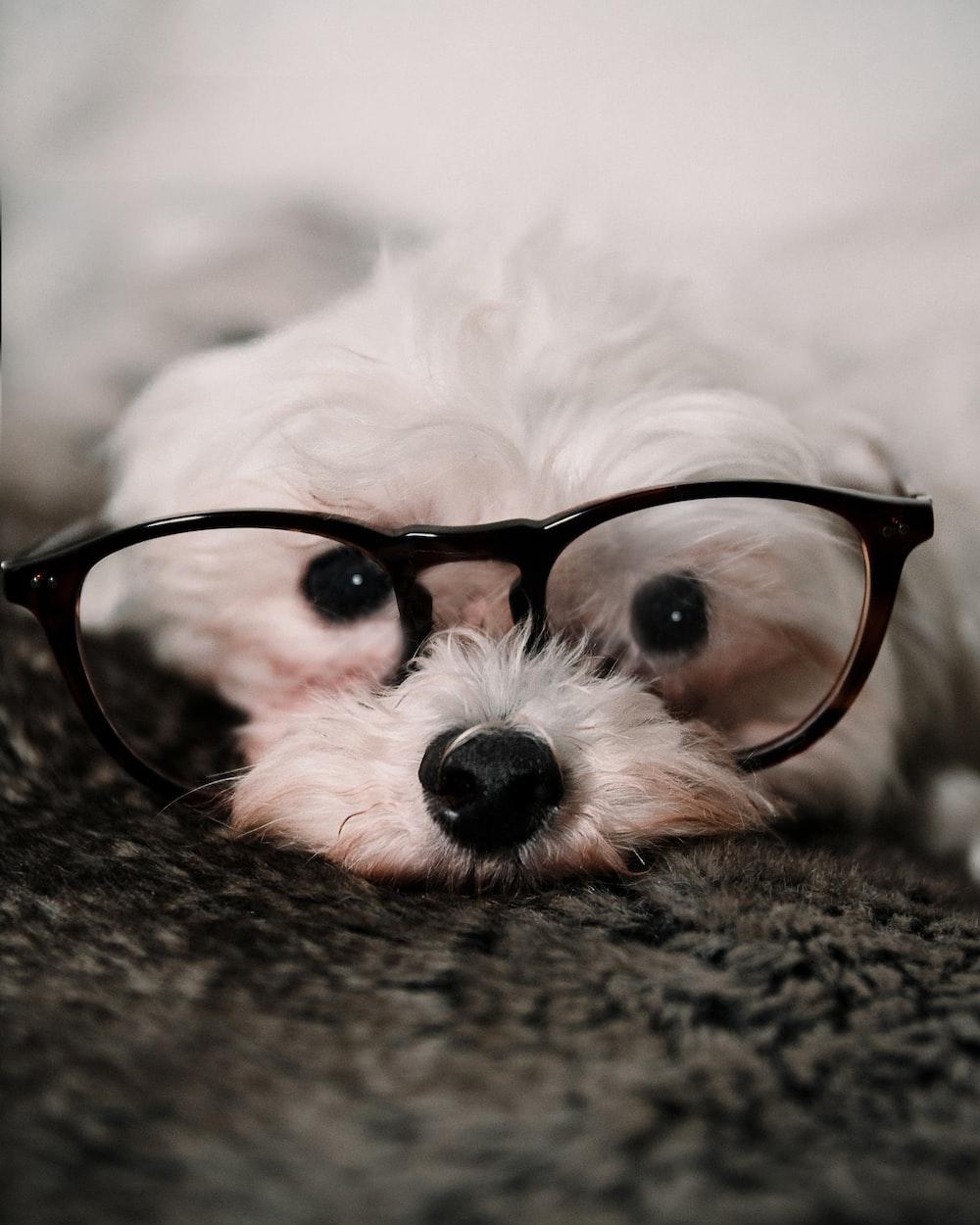 black framed eyeglasses on white fur textile