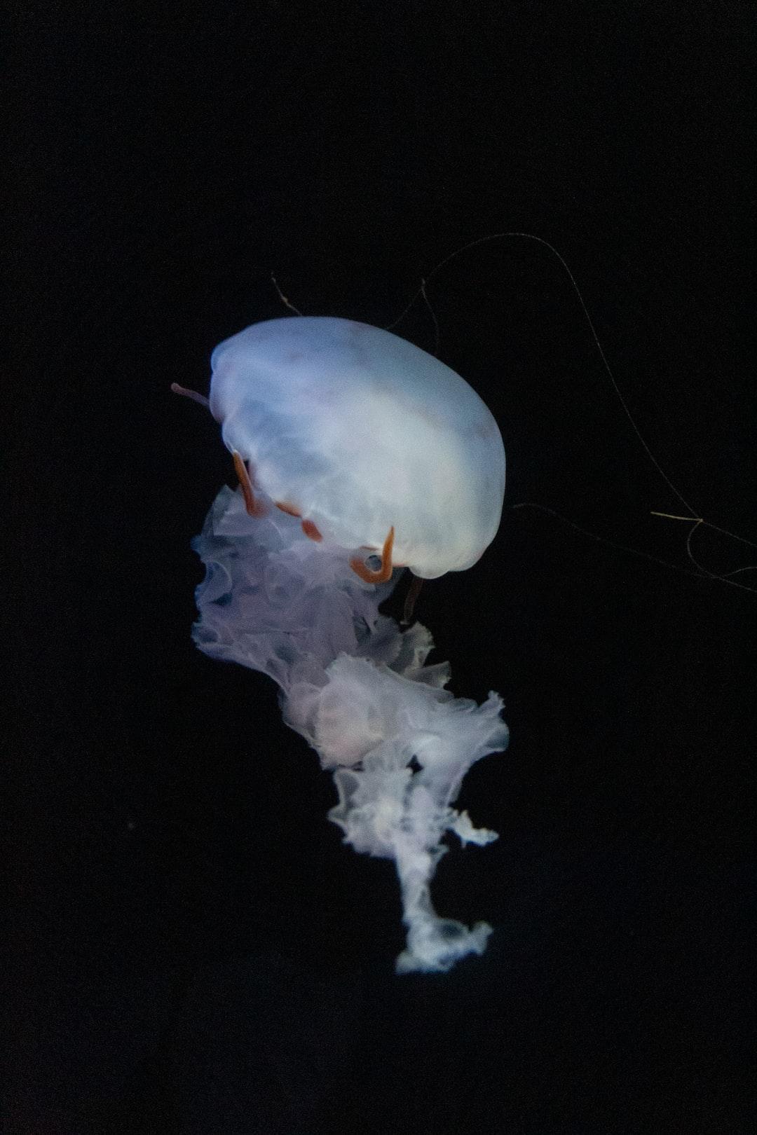 Jellyfish at the Oregon aquarium in Newport.