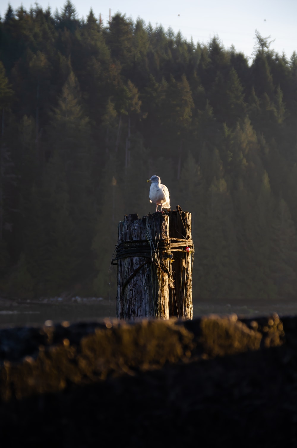 white bird on brown wooden post during daytime