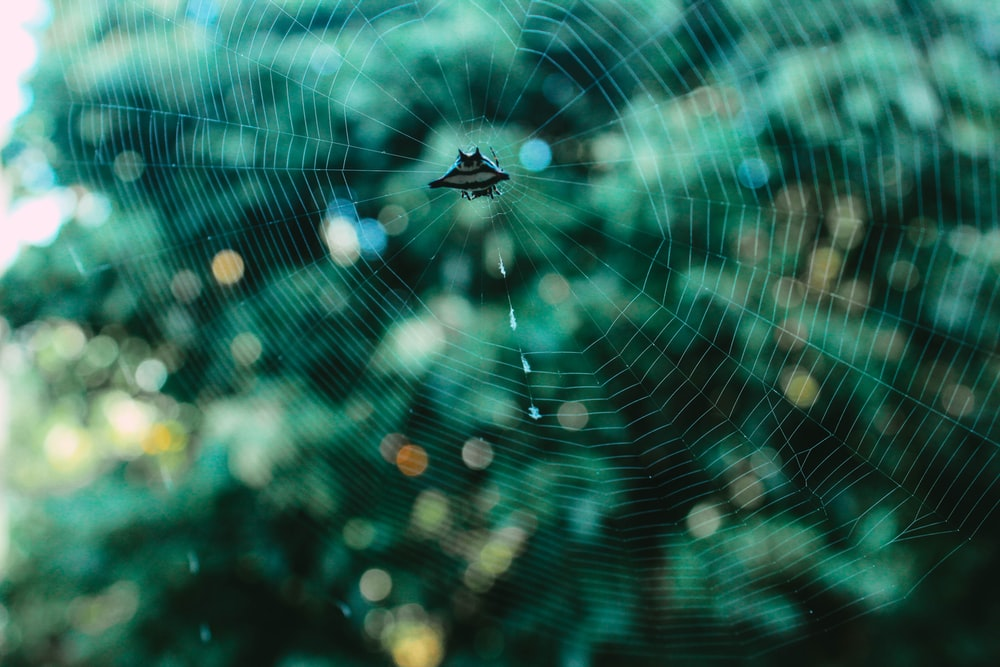 spider on web in close up photography