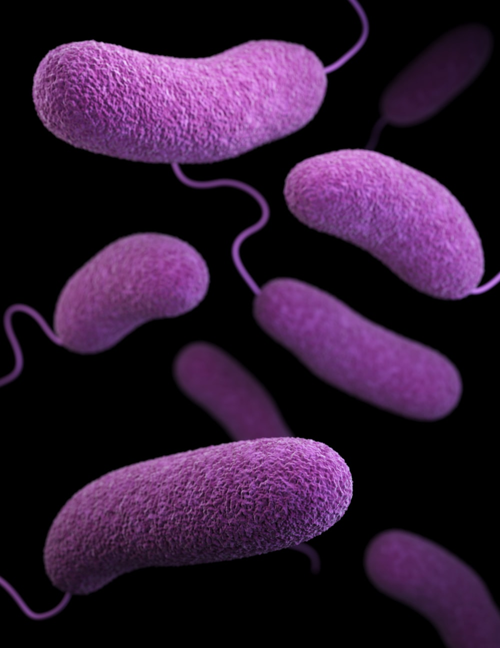 Bacteria Pictures Hd Download Free Images On Unsplash