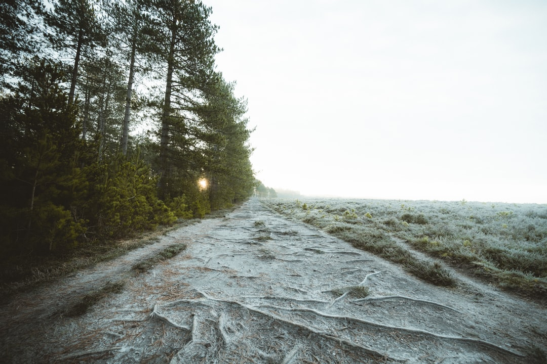 Gray Concrete Road Between Green Trees Under White Sky During Daytime - unsplash