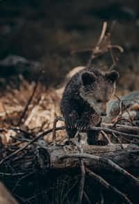 Cub cub stories