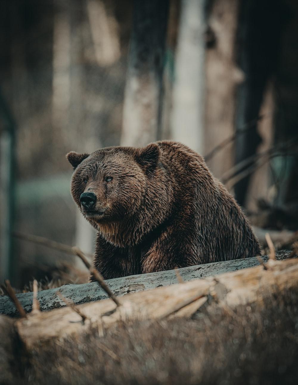 brown bear on brown wooden log during daytime