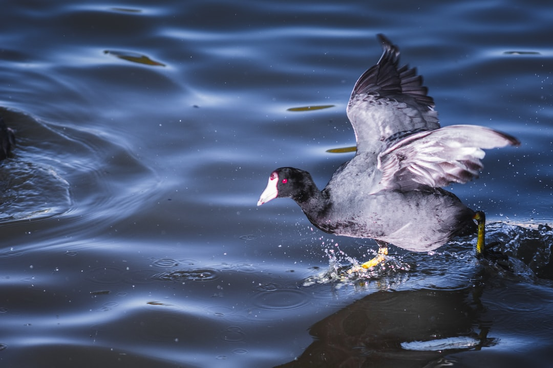 Bird at California City, Central Park, CA, USA