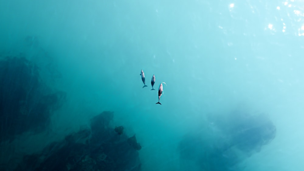 2 person in black wet suit diving on water