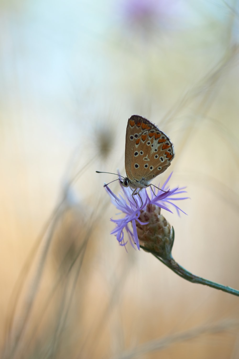 brown and white butterfly perched on purple flower in close up photography during daytime