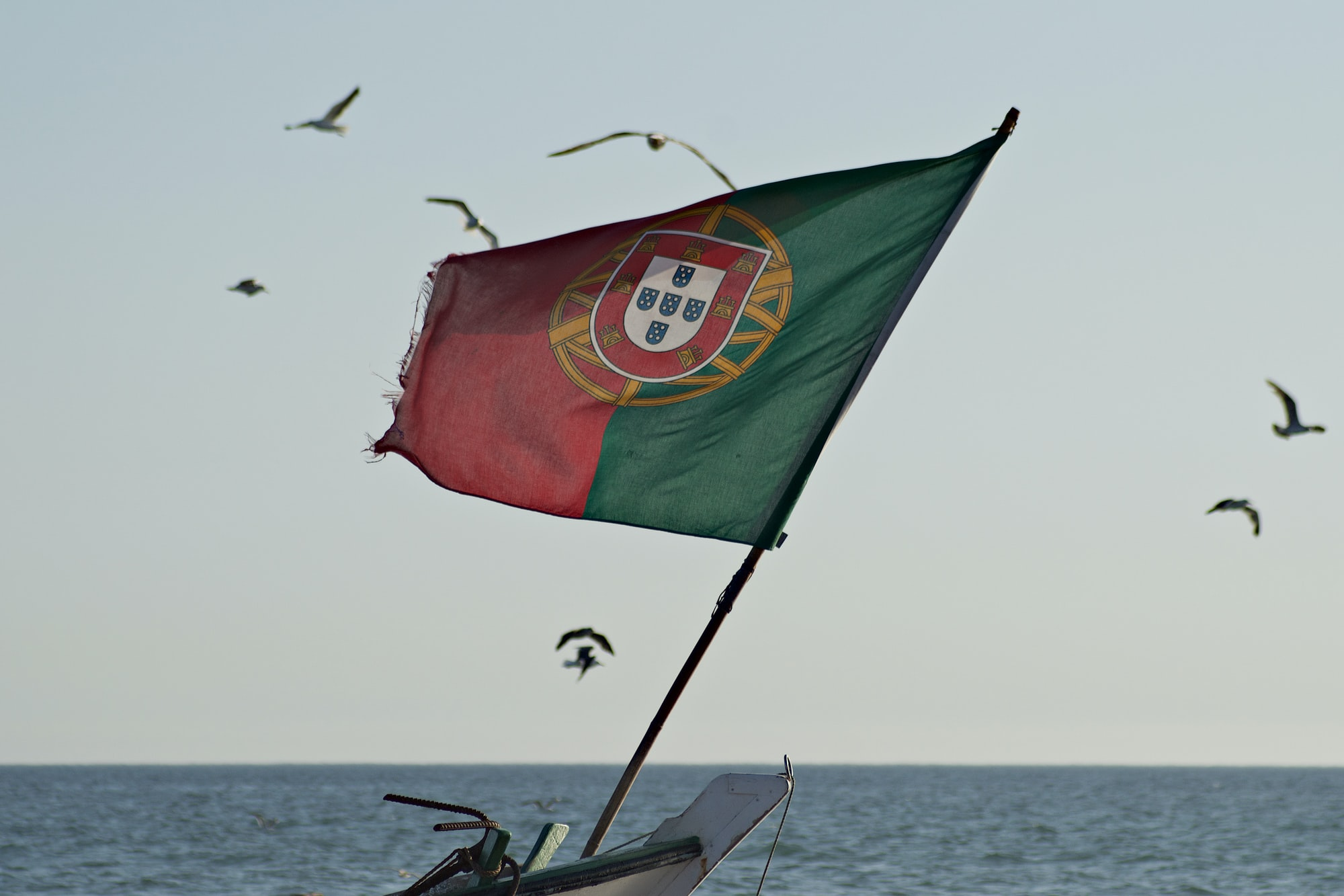 Portuguese flag hoisted on a fishing boat, with seagulls in the background