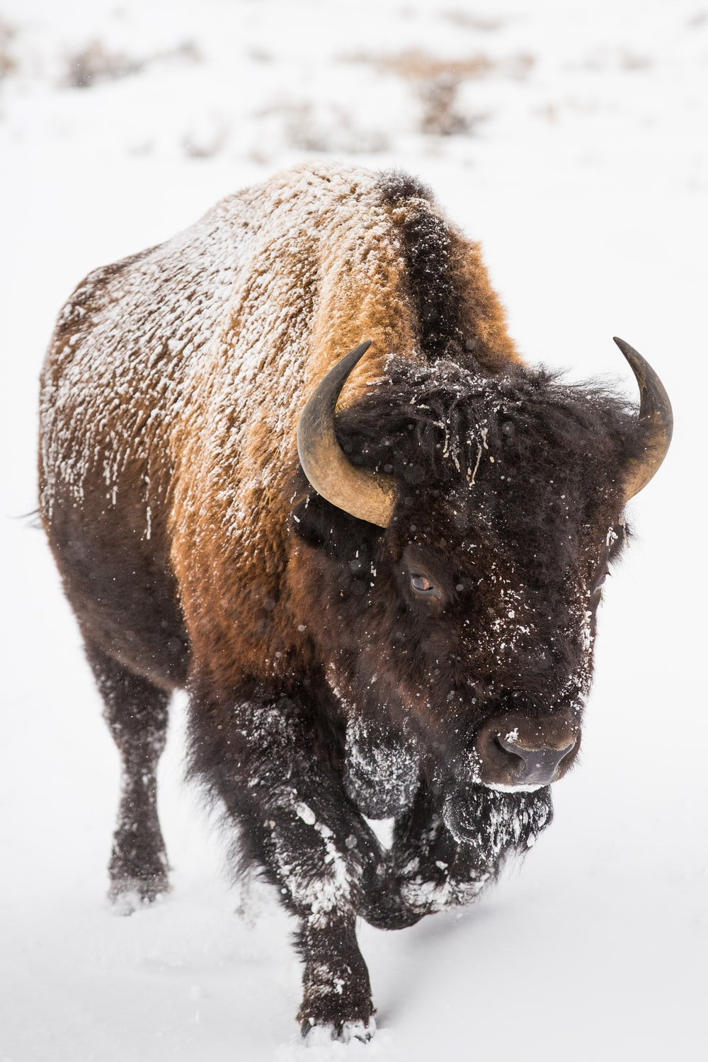 brown bison on white snow covered ground during daytime