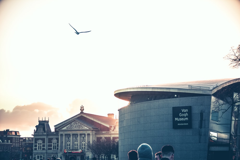 black bird flying over the building during daytime