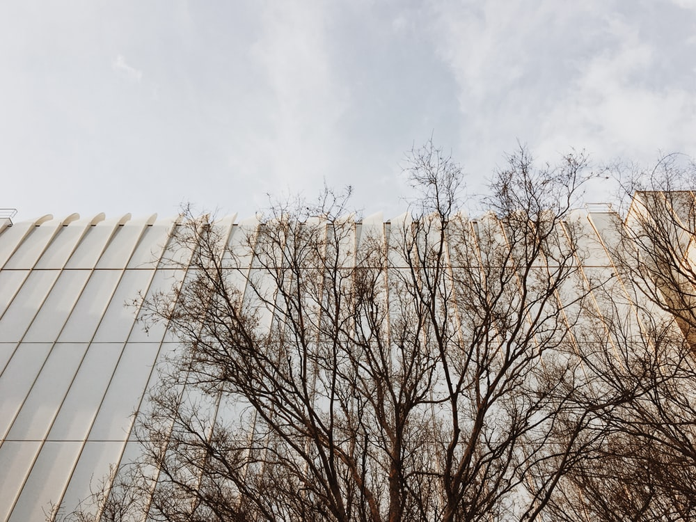 leafless tree under white clouds