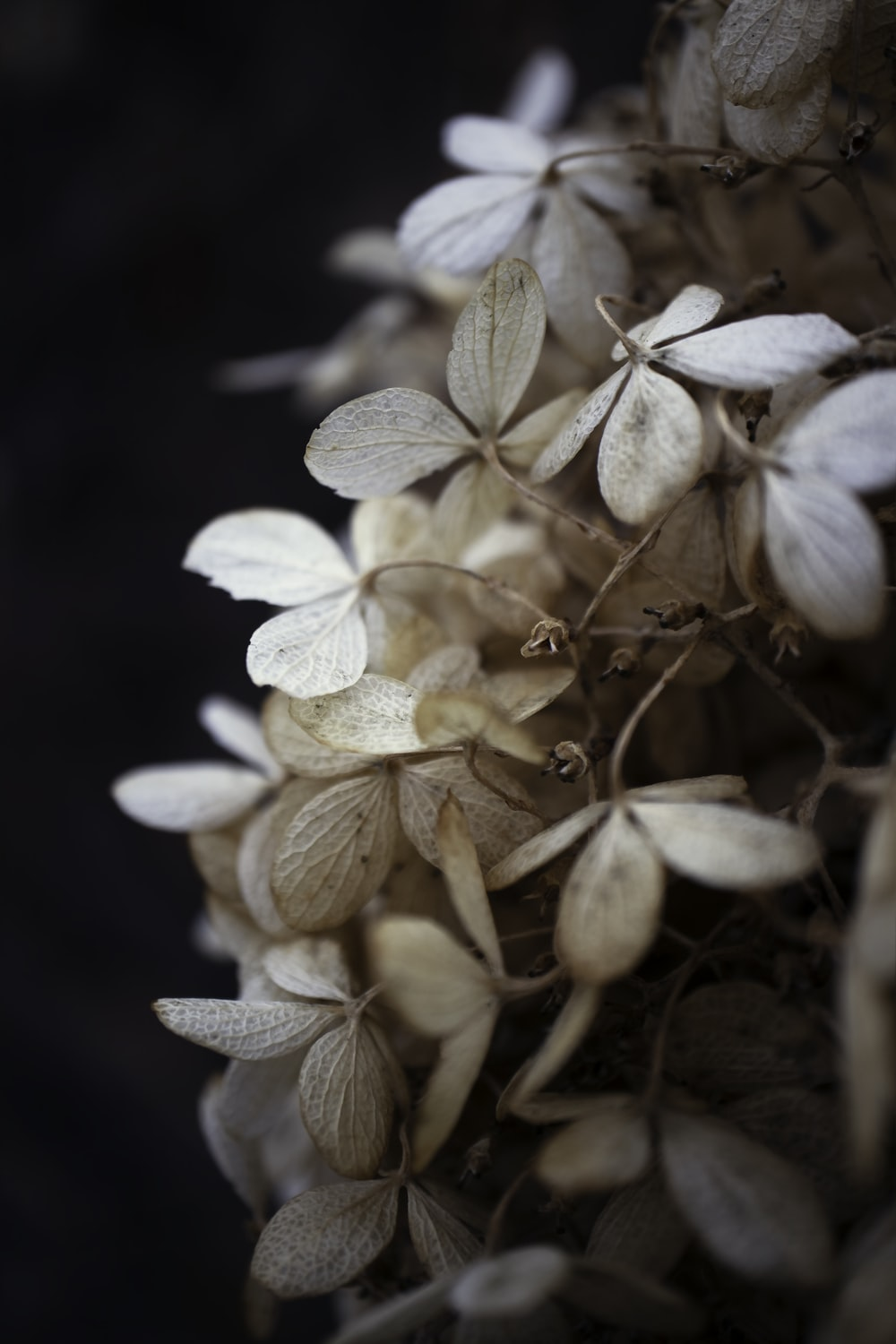 white and brown flower in close up photography