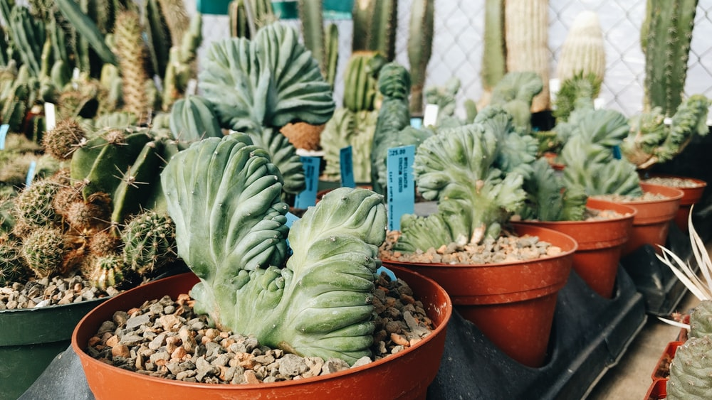 green cactus plant on brown clay pot