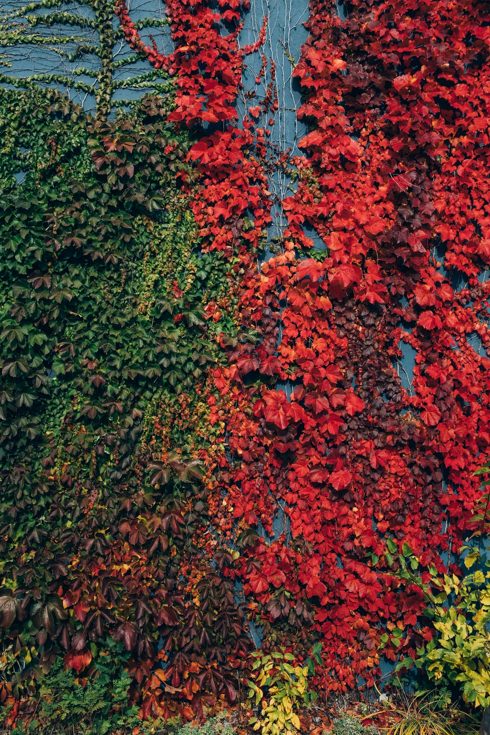 red and green leaves on ground