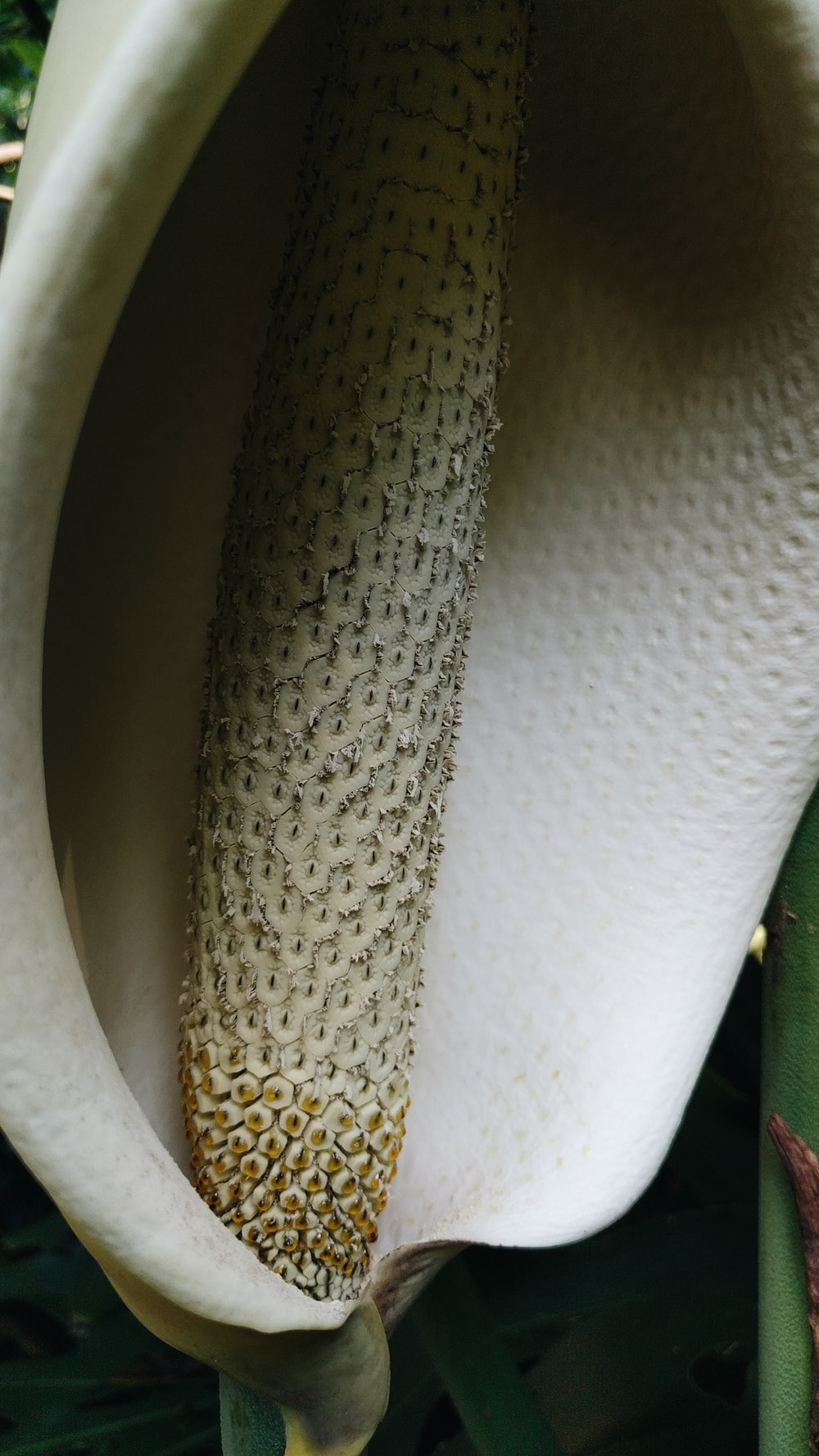 white and brown leather textile