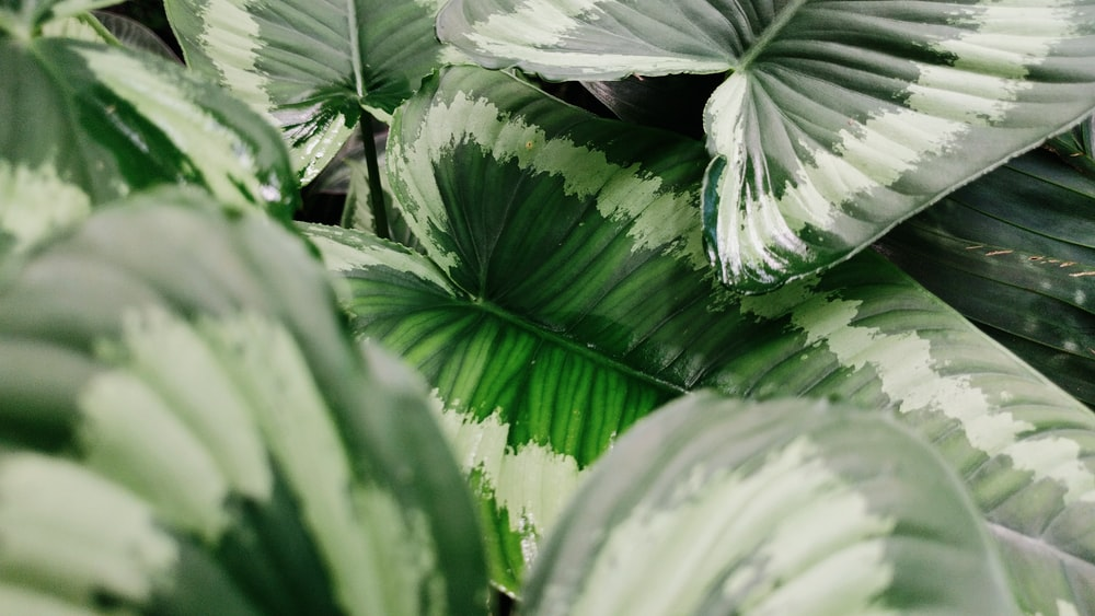 green and white plant leaves