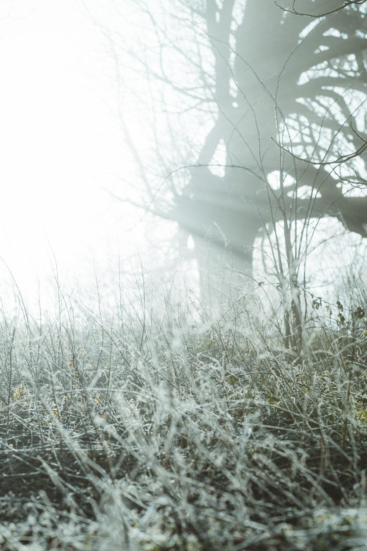 leafless trees on foggy weather