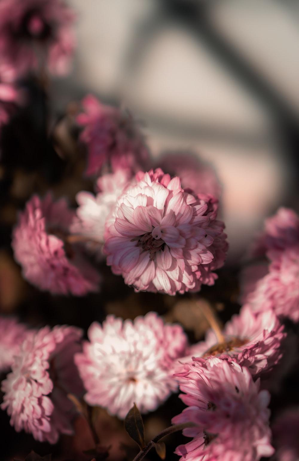 pink and white flowers in tilt shift lens