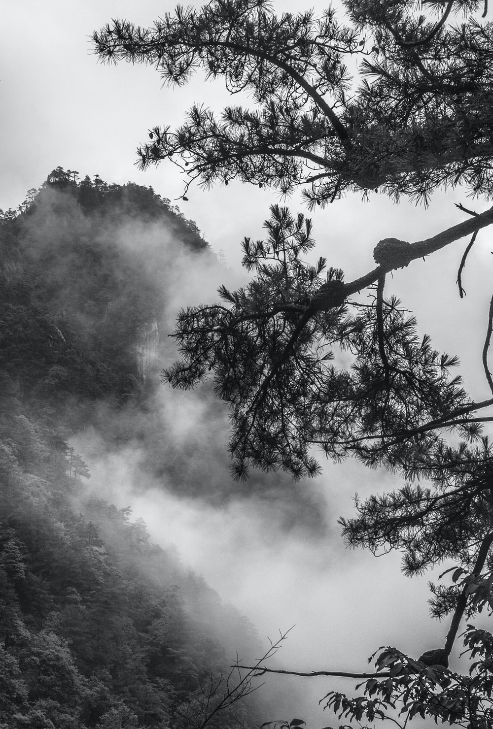 grayscale photo of bare tree under cloudy sky