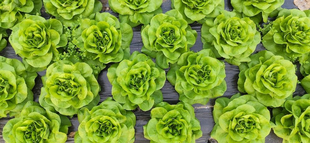 green succulent plants on gray concrete floor