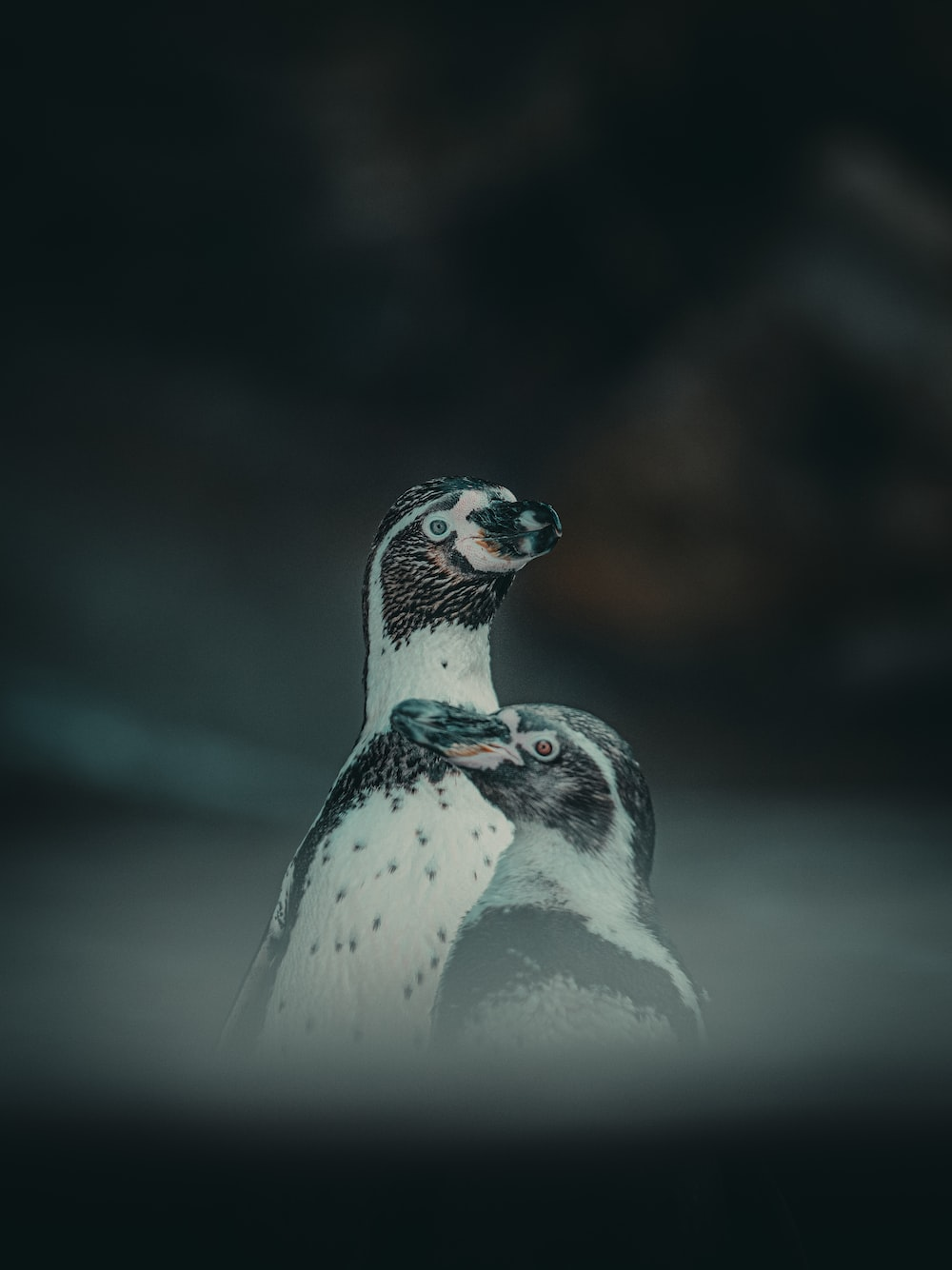 white and black penguin in close up photography
