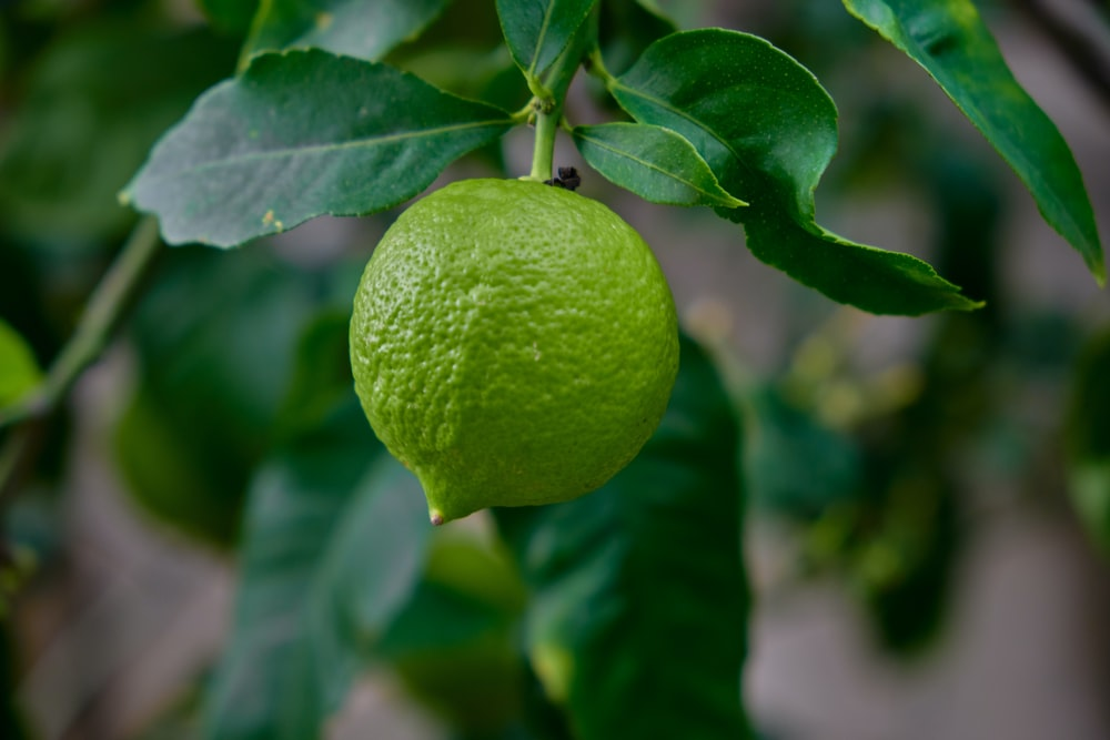 green lemon fruit in close up photography