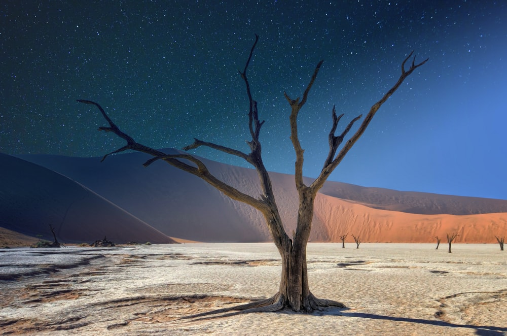 leafless tree on white sand during night time