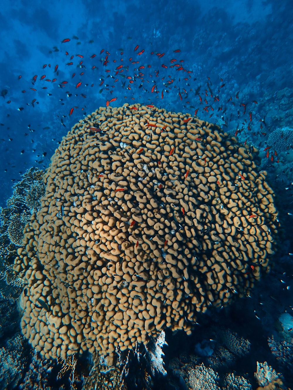 brown coral reef in water