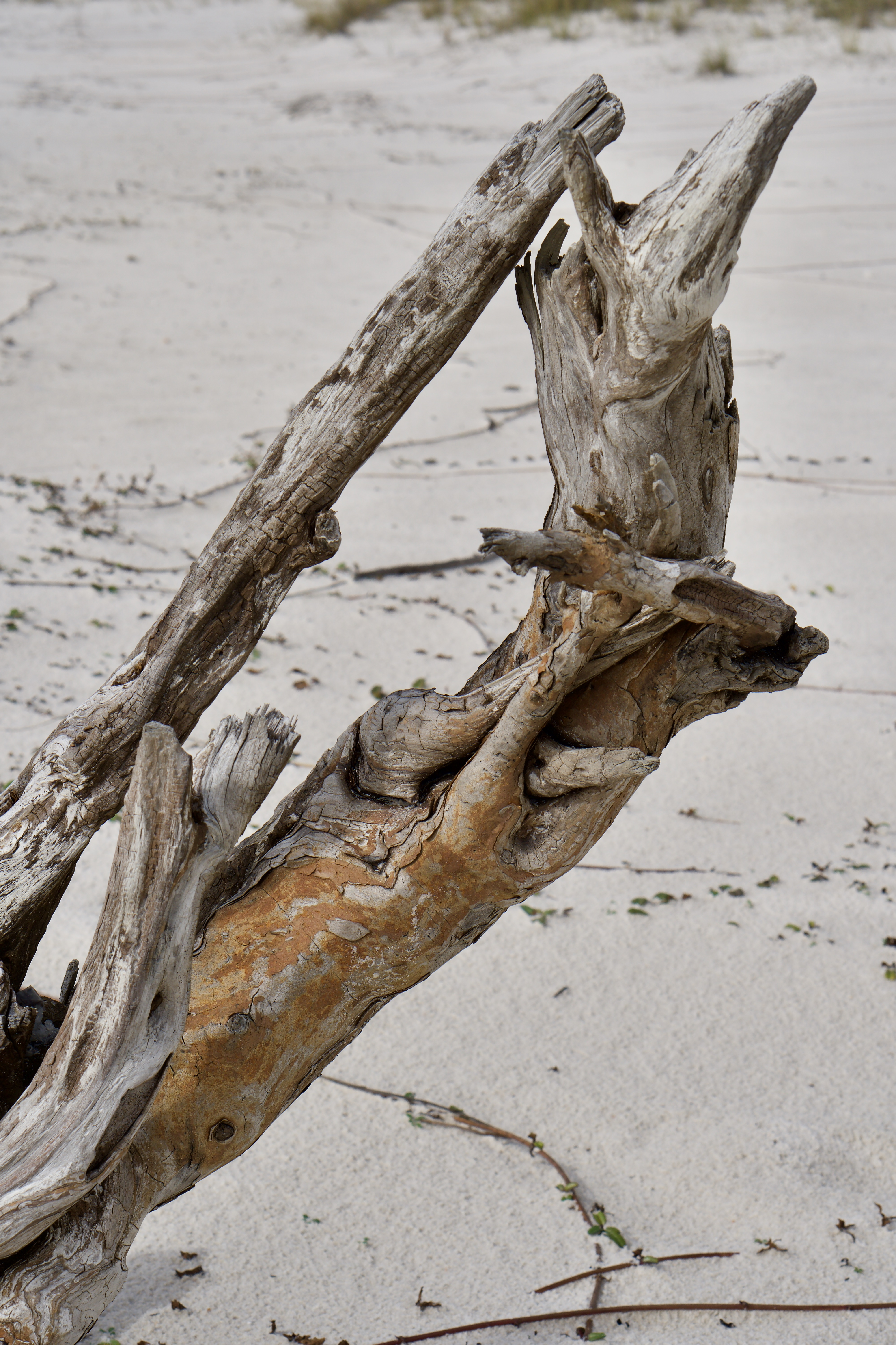 A large piece of driftwood on the beach